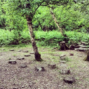tree stumps in a path as stepping stones