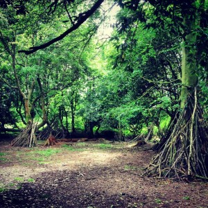 several dens set up around trees in Ringwood Toll trail