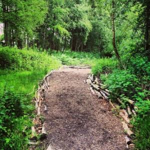 path through a woodland