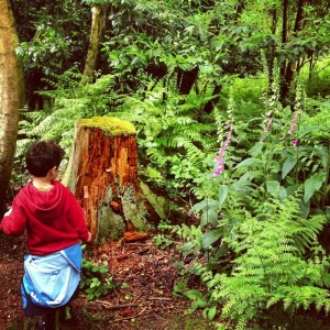a little boy looking at a tree stump and foxgloves