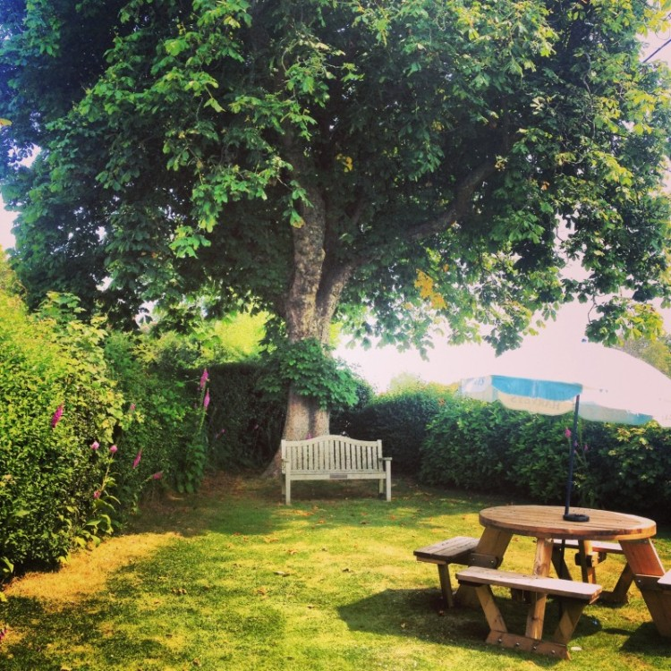 bench-under-huge-tree-in-english-pub-garden