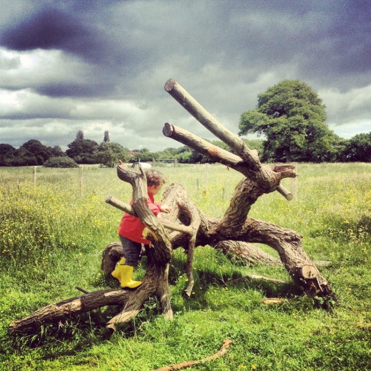 child-climbing-fallen-tree