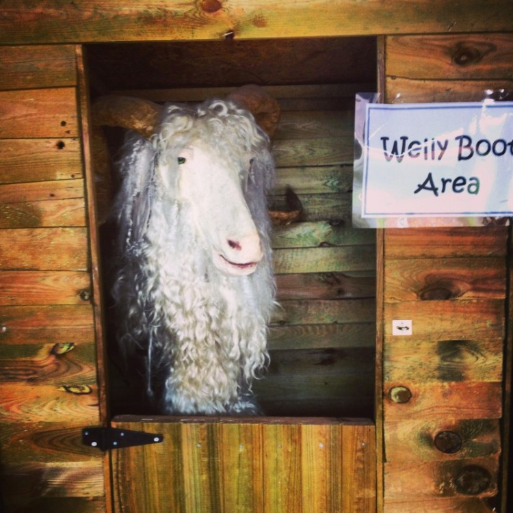 false-goats-head-peeking-out-of-stable-door