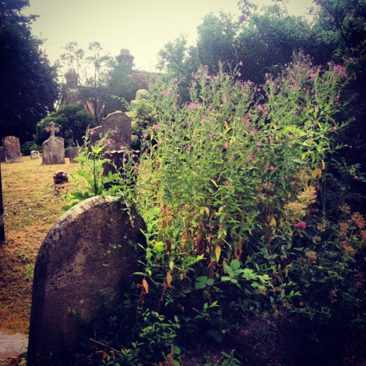 wild-flowers-and-grave-stones