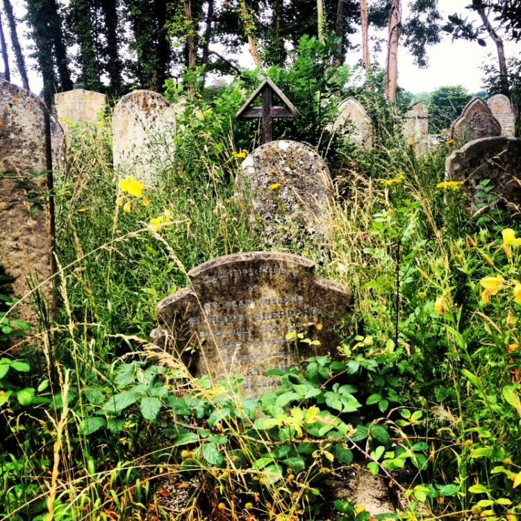 wild-flowers-growing-between-gravestones