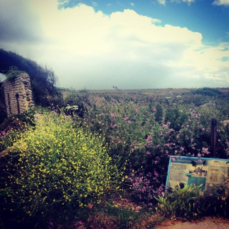 flint-walls-wind-blown-hedges-shingle-beach