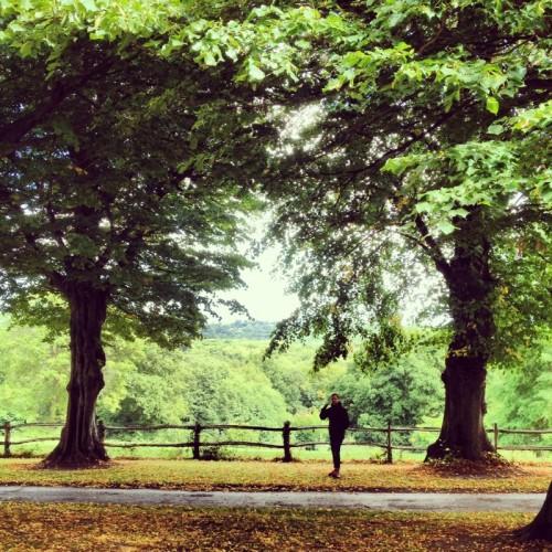 man-under-trees