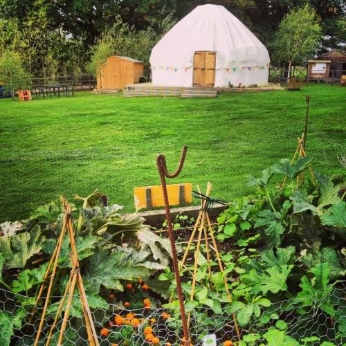 yurt-at-animal-sanctuary