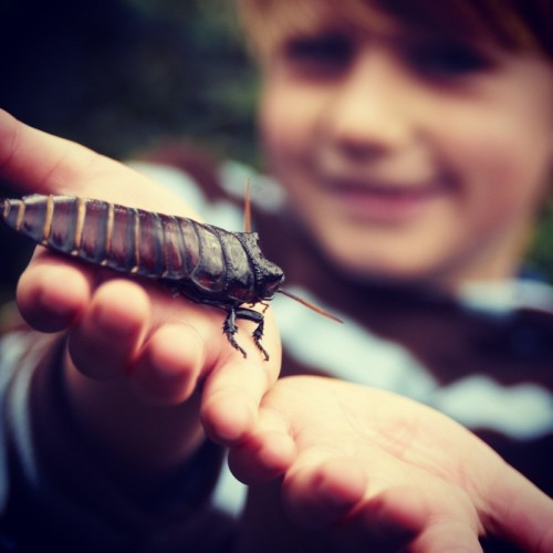 child-with-bug