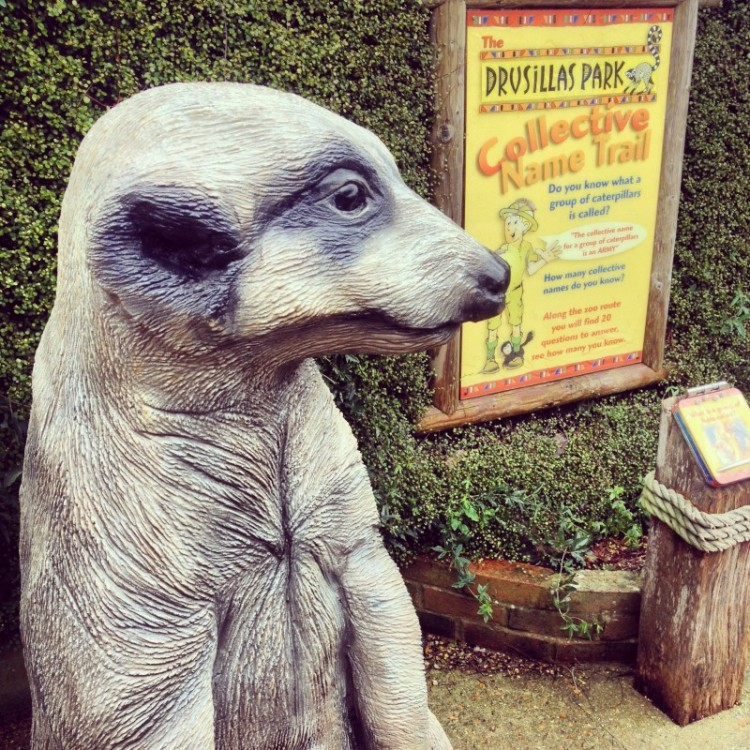 meerkat-and-poster-at-zoo