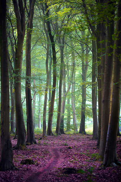 friston-forest