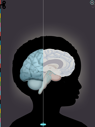 8-humanbody-brain-384x512