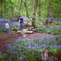 The Last Days of Blue: Arlington Bluebell Walk at Beatons Wood, Sussex (and some other woods, too)